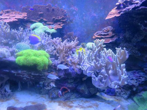 океанариум 10.jpg