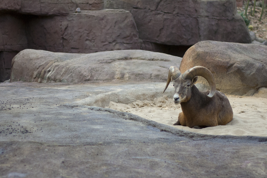 Royal Burger's Zoo