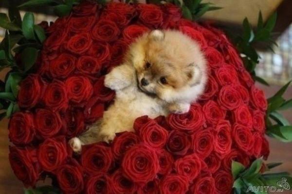 Фото подарок самой красивой девушке
