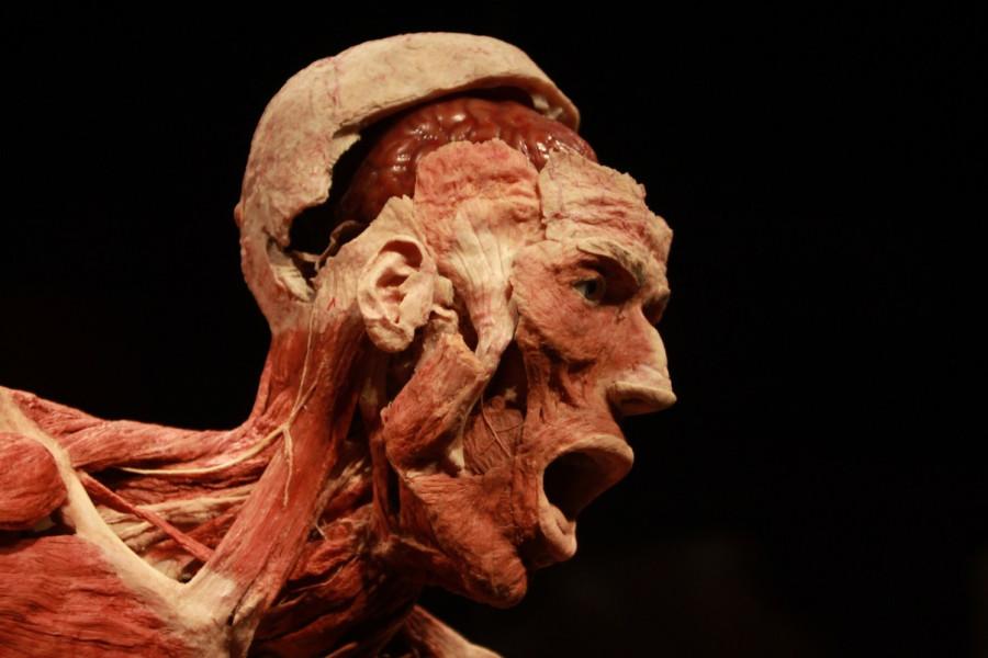 Body-Worlds-Gunther-von-Hagens-foto-Emanuele-Bai-33