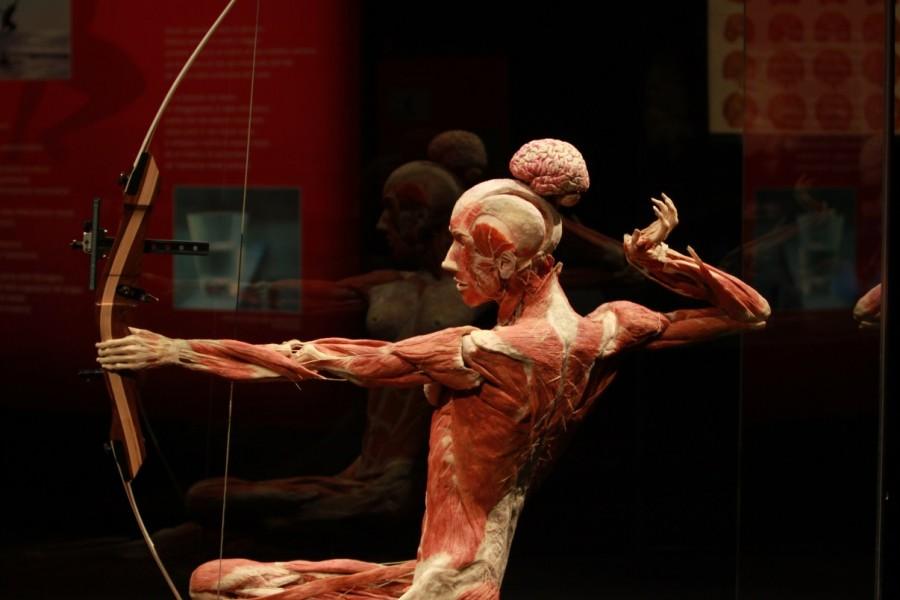 Body-Worlds-Gunther-von-Hagens-foto-Emanuele-Bai-31