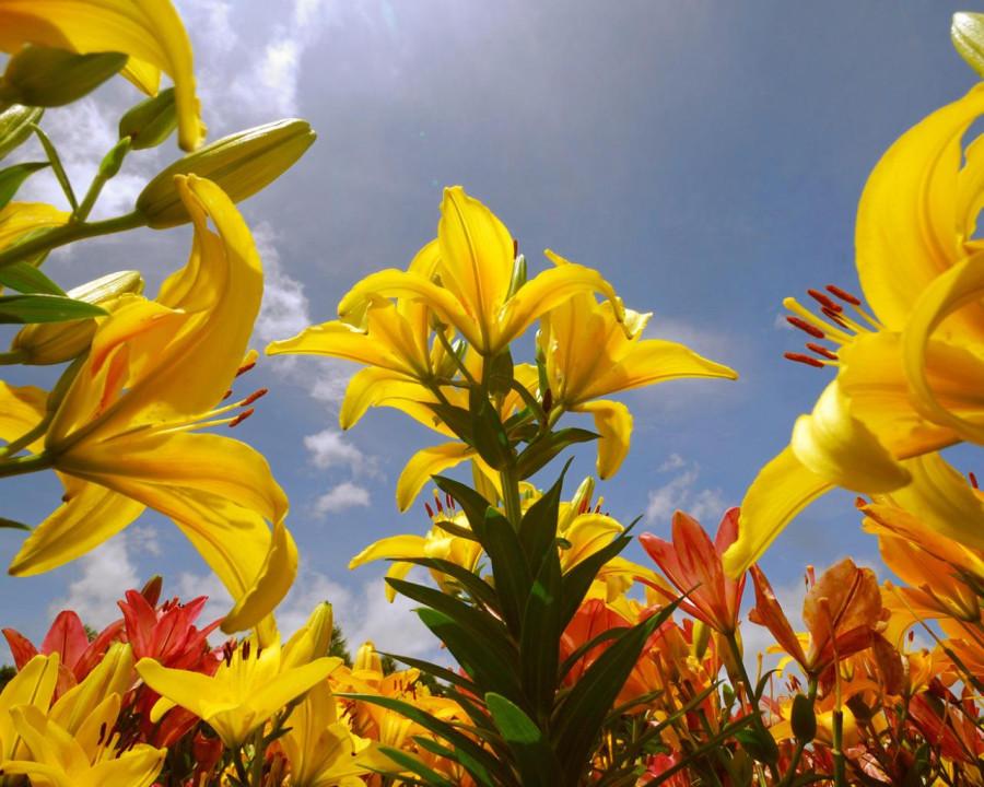 hq-wallpapers_ru_flowers_70031_1280x1024