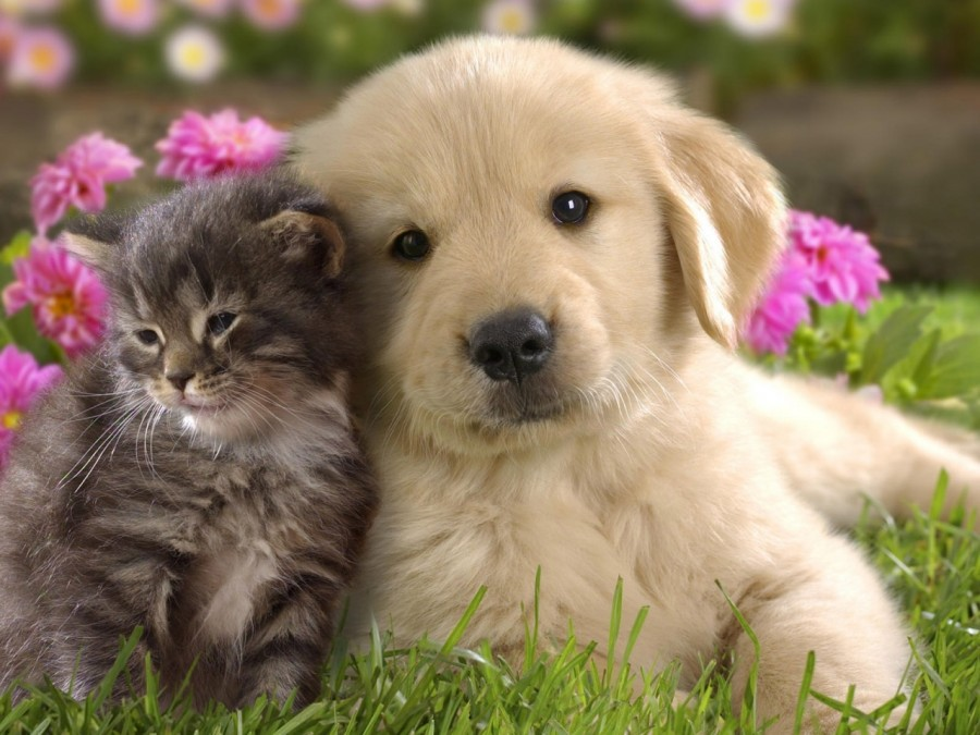 puppy_kitten_grass_flowers_couple_friendship_29330_1280x960