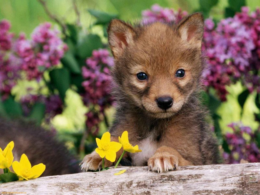 sweet-cats-puppies-puppy-in-flowers-468759