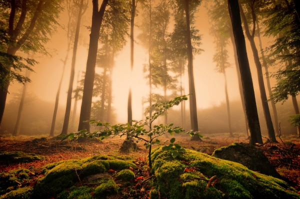 forest_enlightenment_by_tomsumartin-d46wkkn