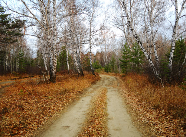 road-in-autumn-forest-1318271179yAn