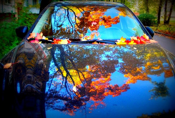 Авто и листва