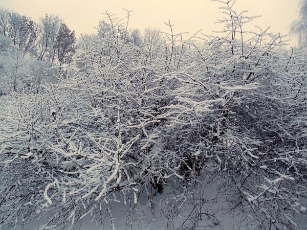 Обычная русская зима. Ну ни разу не аномальная.:) СПб, 17 января 2016 г.