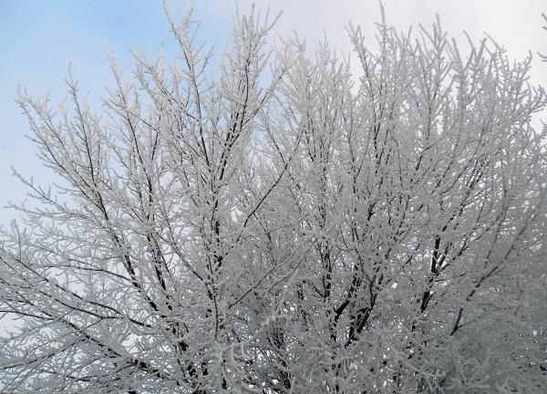 СПб, Гутуевский остров, Двинская улица, февраль 2018 г.