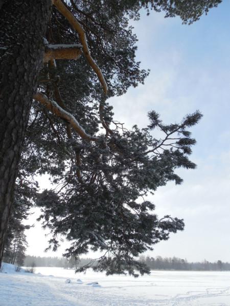 Кексгольм (Приозёрск), февраль 2018 г.