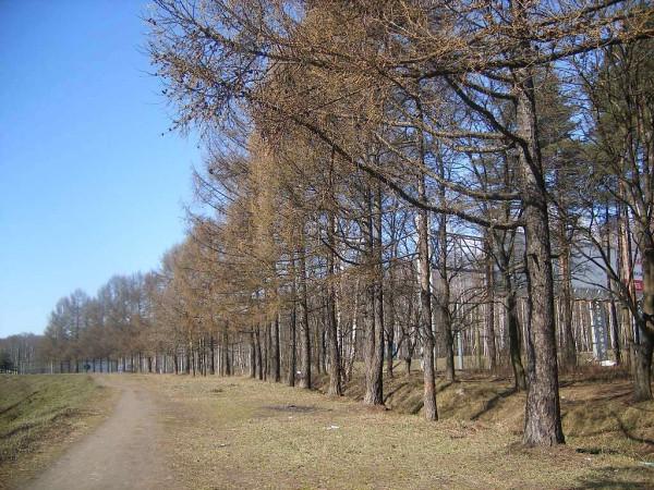 Это бывшая его часть между проспектом Испытателей и Сестрорецкой линией ЖД. Апрель 2007 г.