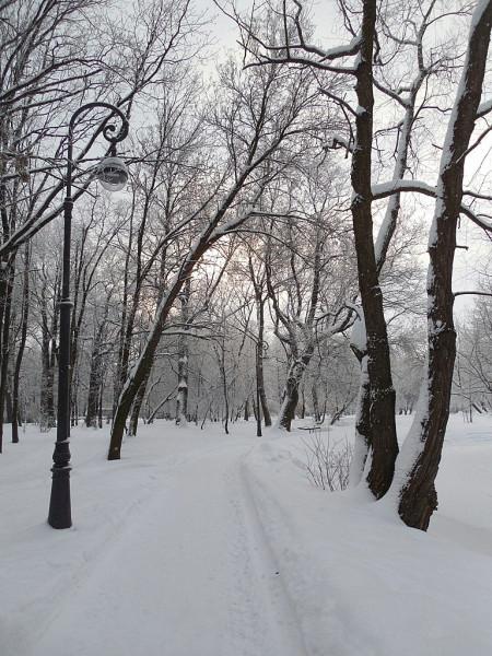 Западная часть парка. Январь 2019 г.
