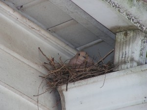 Here is the dove nesting over the porch.