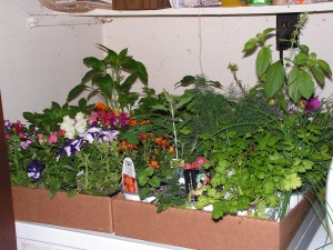Two flats of small and medium plants are sitting on the washer.