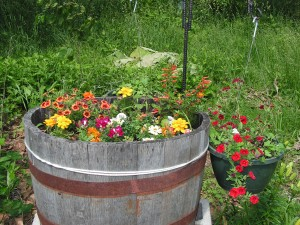 This is a closeup of the barrel garden.