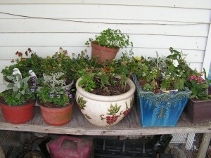 These potted plants are on the porch.