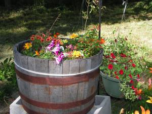 This is the barrel garden in bloom.