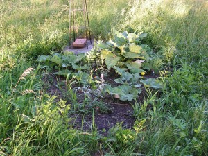 Here is the septic garden.