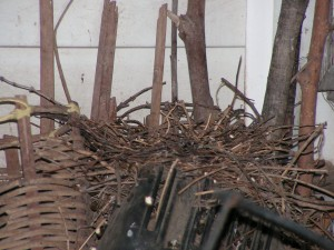 The mourning doves vacated the nest a couple of days ago.