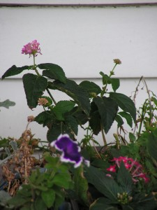 This flower box is blooming on the porch.