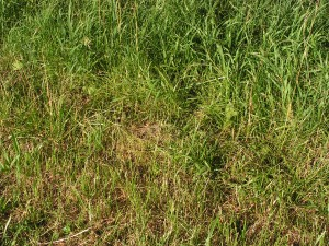 This is a medium view of the rabbit nest.