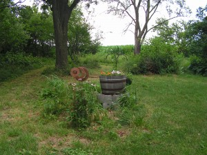 This is the barrel garden.