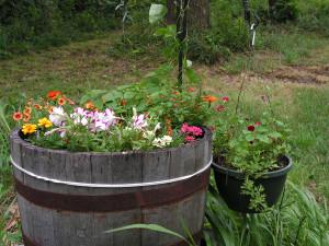 Closeup of the barrel garden.