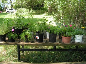 Here is the picnic table garden.