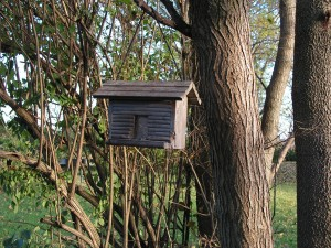 The hopper feeder is in the forest garden near the metal feeder.