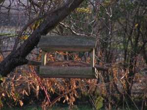 The fly-through feeder hangs in the birdgift apple tree between the house and the south lot.