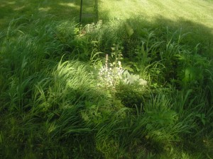 This is the septic garden fully grown in.