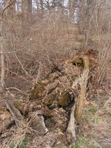 The fallen log is beginning to crumble.