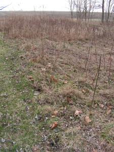 The prairie garden is mostly barren.