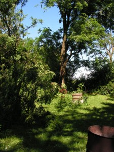 Here you can see the fallen tree and its upright section.