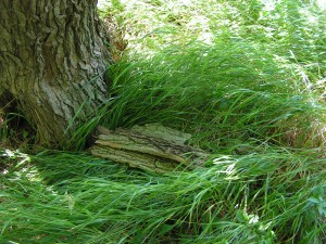 I found several large bark slabs in the savanna and made a bug shelter.