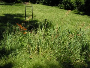 This is the septic garden.