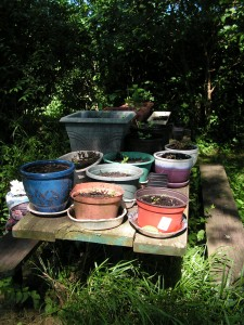 The picnic table has a container garden.