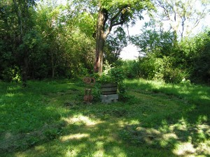 This is a wide view of the barrel garden and yard.