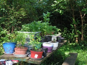 The container garden is on top of the picnic table.