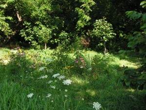 Here is a long view of the wildflower garden.