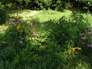 Here is a medium view of the wildflower garden.