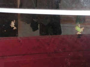 Two tree frogs, one gray and one green, are clinging to the storm door.