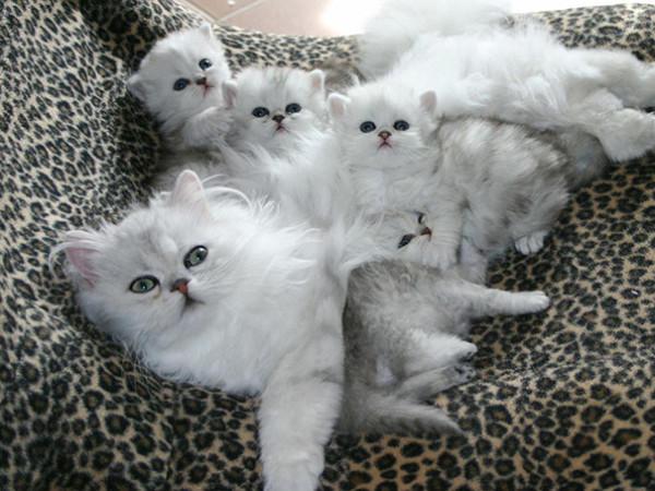 proud-cat-mommies.jpg