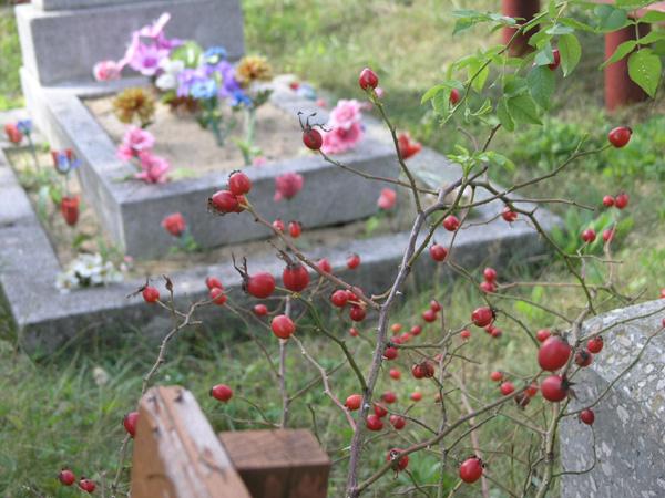 Брест. Бабушкина могила - 2