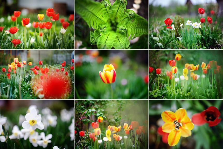 цветы+9
