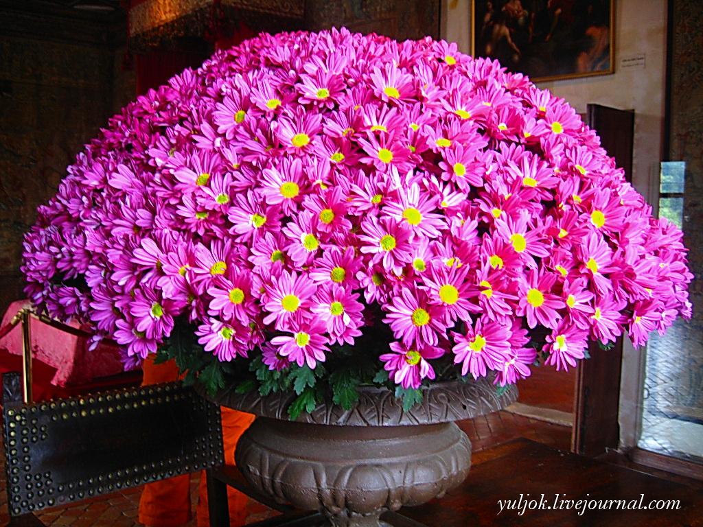 IMG_415 Цветы просто роскошнейшие
