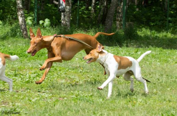 Комментарии к статье: Малыш и щенок родились в один
