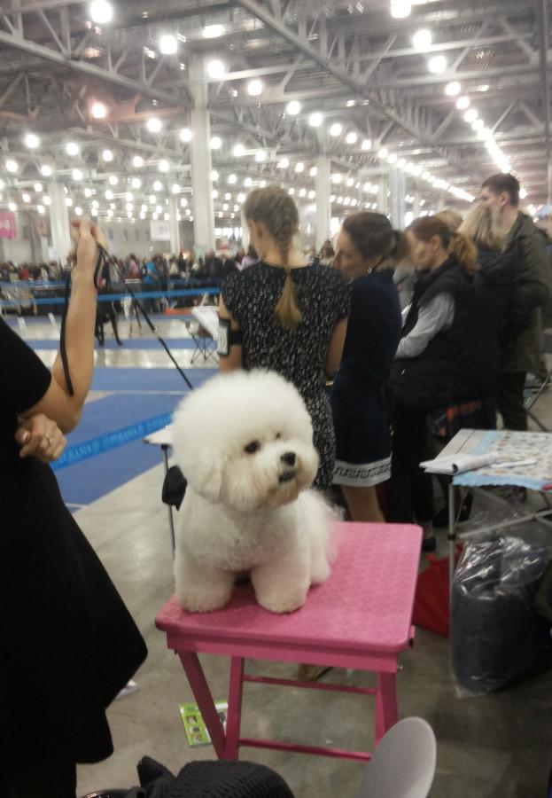 собака баробака
