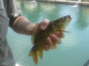 рыбалка улов