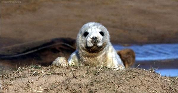 cute_baby_seals_10